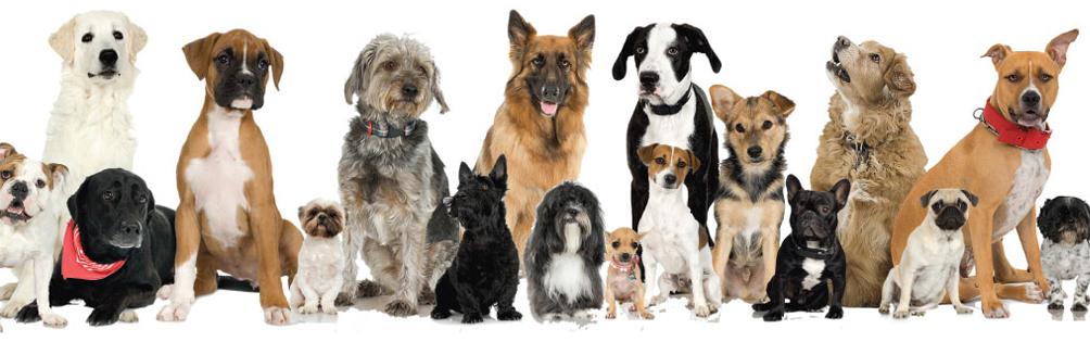 Forrás: https://www.theodysseyonline.com/if-the-zodiac-signs-were-dogs
